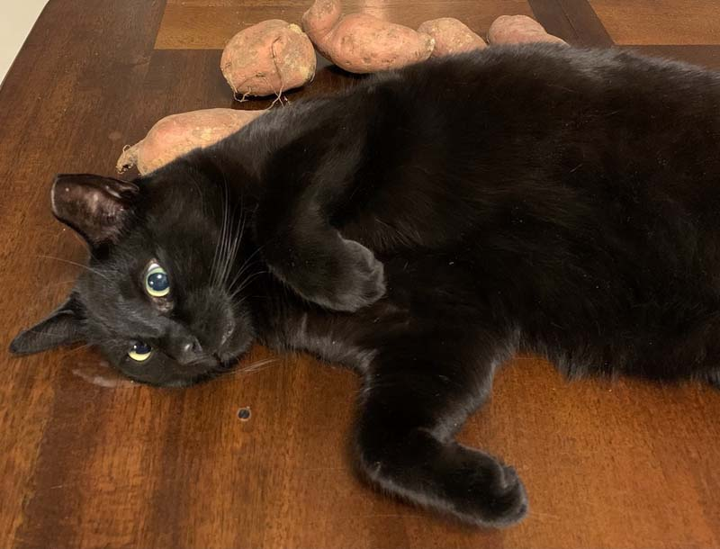 photo of a black cat on a table laying against a pile of sweet potatoes